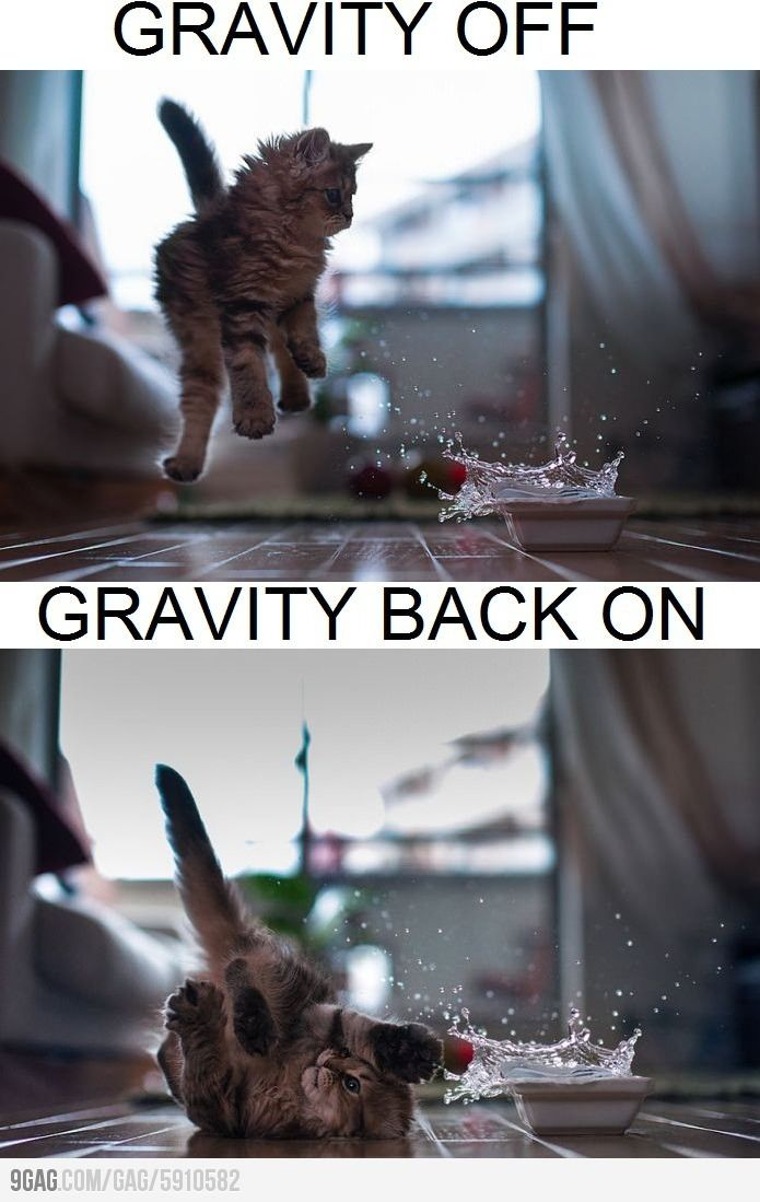 Gravity Kitty Kittens Funny Funny Cat Pictures Cat Pics