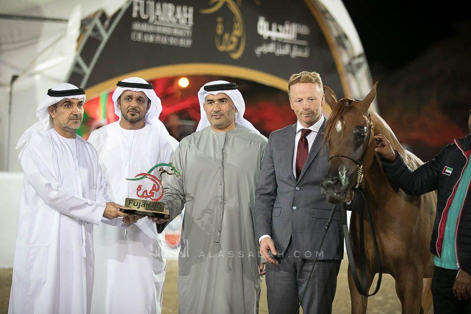 النتائج النهائية لبطولة الفجيرة 2019 لجمال الخيل العربية Arabian Horse Horses Fashion