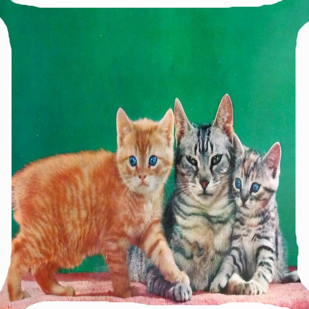 Cat kittens play funny kitty pet party 2 side pillow cushion cover