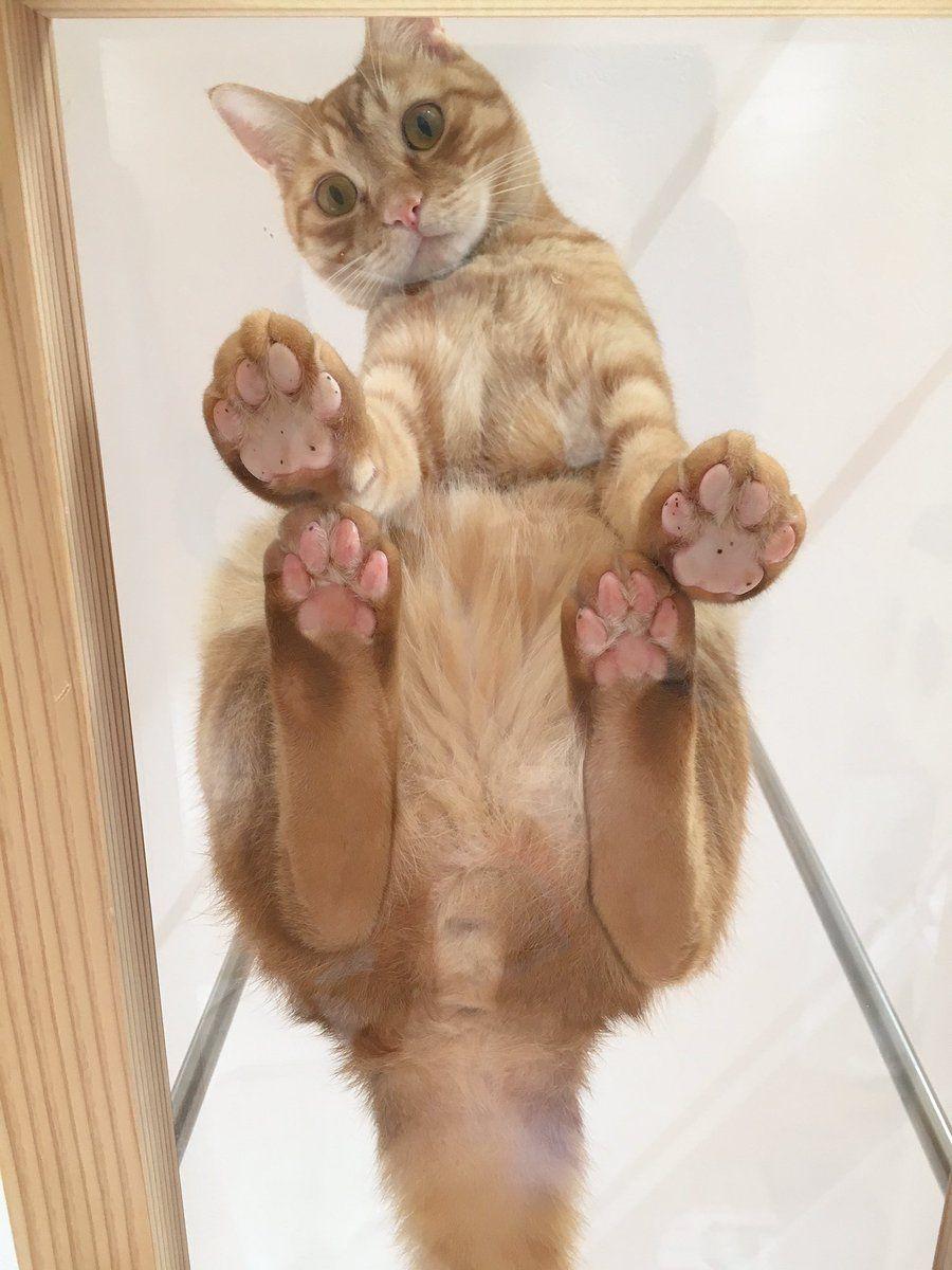 猫カフェ福ねこ 福井 On Twitter 美しい猫 猫 ねこ