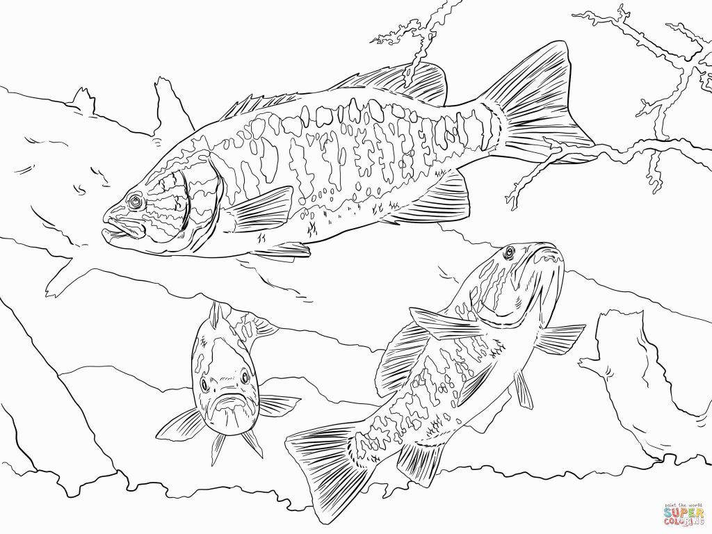 Bass Coloring Pages Coloring Pages Free Coloring Pictures Fish Artwork