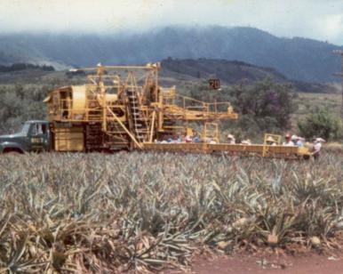 Life in the Pineapple Fields Big island hawaii kona