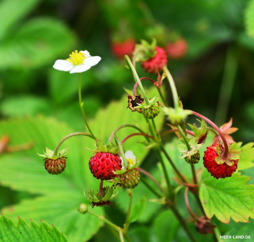 Pin Von Kathrin Wagner Auf Pflanzen: Plants, Garden Und Wild