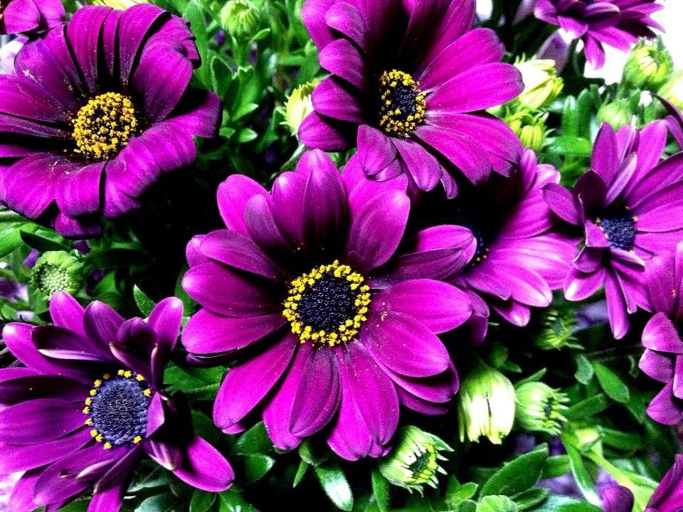 Flowers in Italy dimorfoteca spring primavera fiori