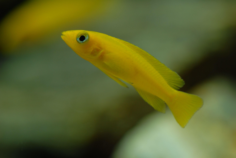 Freshwater fish aquariums fish tetrafish freshwater for Freshwater exotic fish