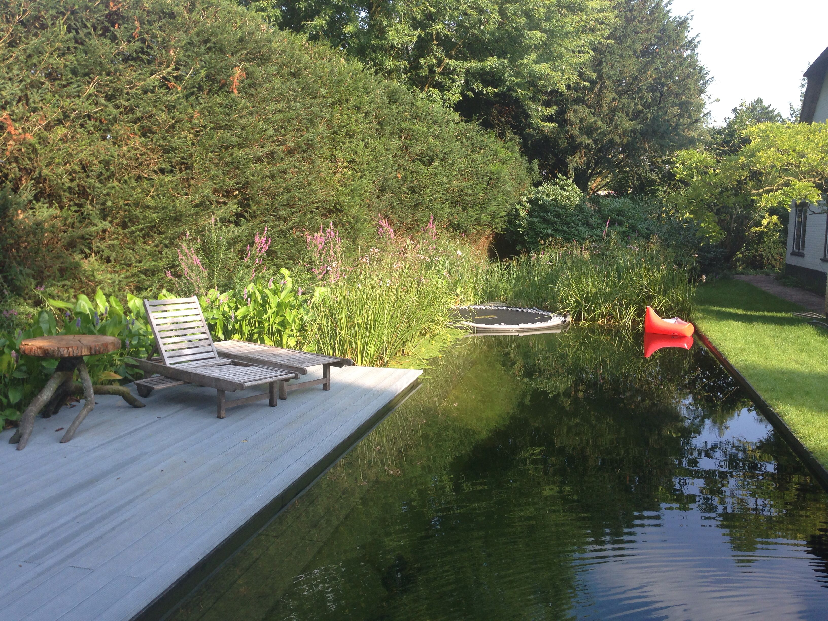 Eco friendly pool designs solar heating and bio filter interior - Natural Pool With Trampoline From Lilypond