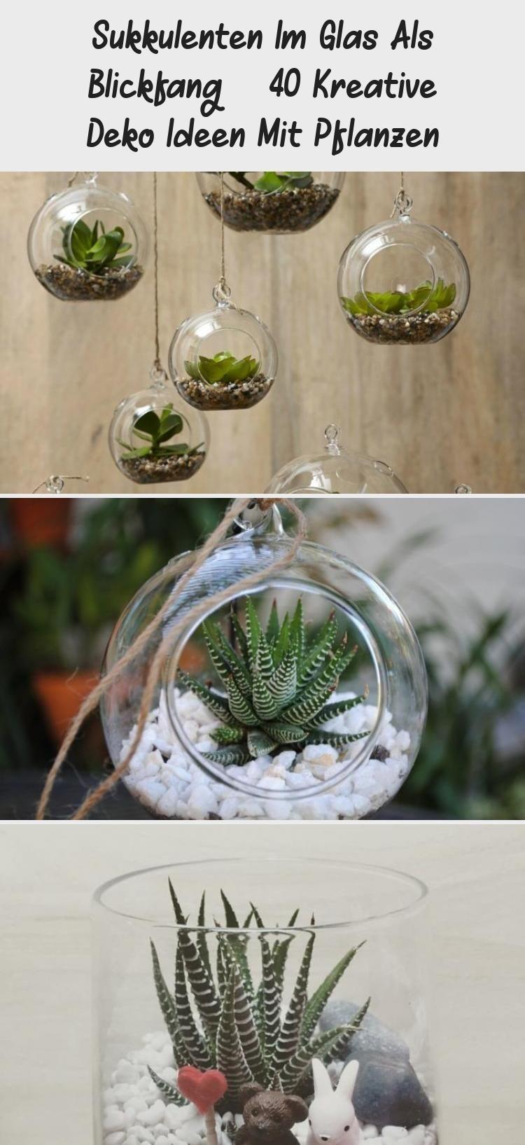 Sukkulenten im Glas als Blickfang - 40 kreative Dekorationsideen mit Pflanzen