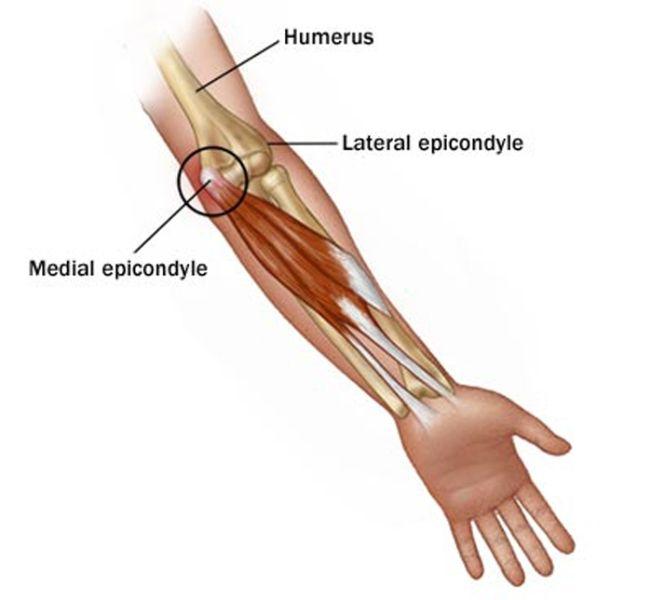 musculos codo - Buscar con Google | Human Anatomy | Pinterest ...