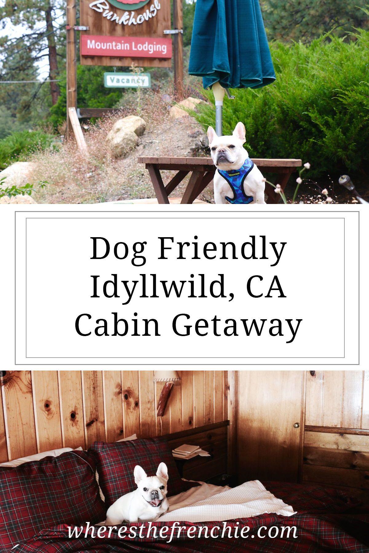 Idyllwild Ca Getaway Where S The Frenchie Idyllwild Idyllwild Ca Dog Friendly Hotels