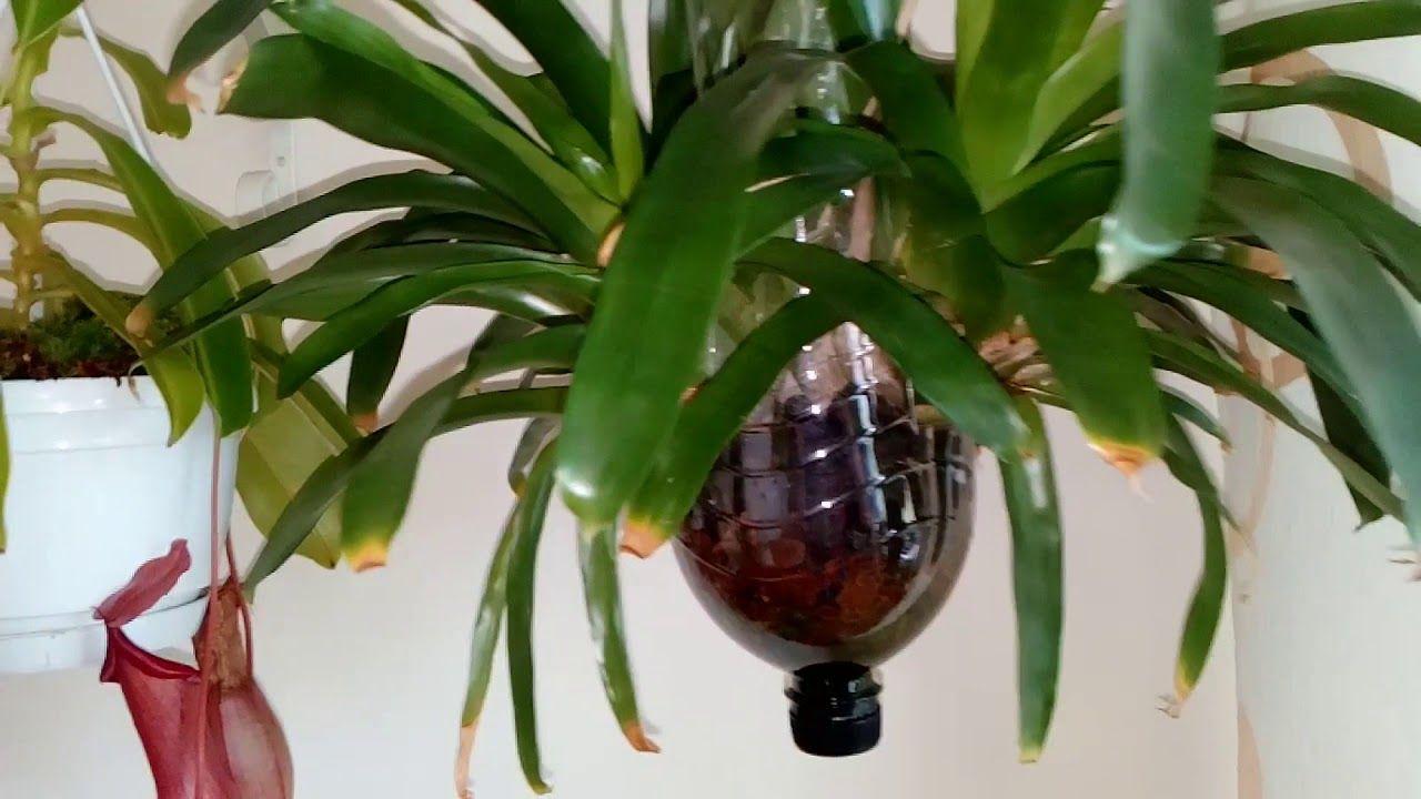 Cómo plantar una Orquídea en una botella de plástico | Compartir ...