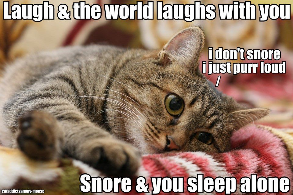 So Mine Isn T The Only Cat That Snores Baby Cats Kittens Cutest Animals