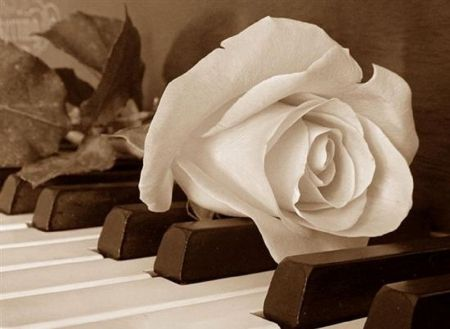 Pics For White Rose Piano Wallpaper