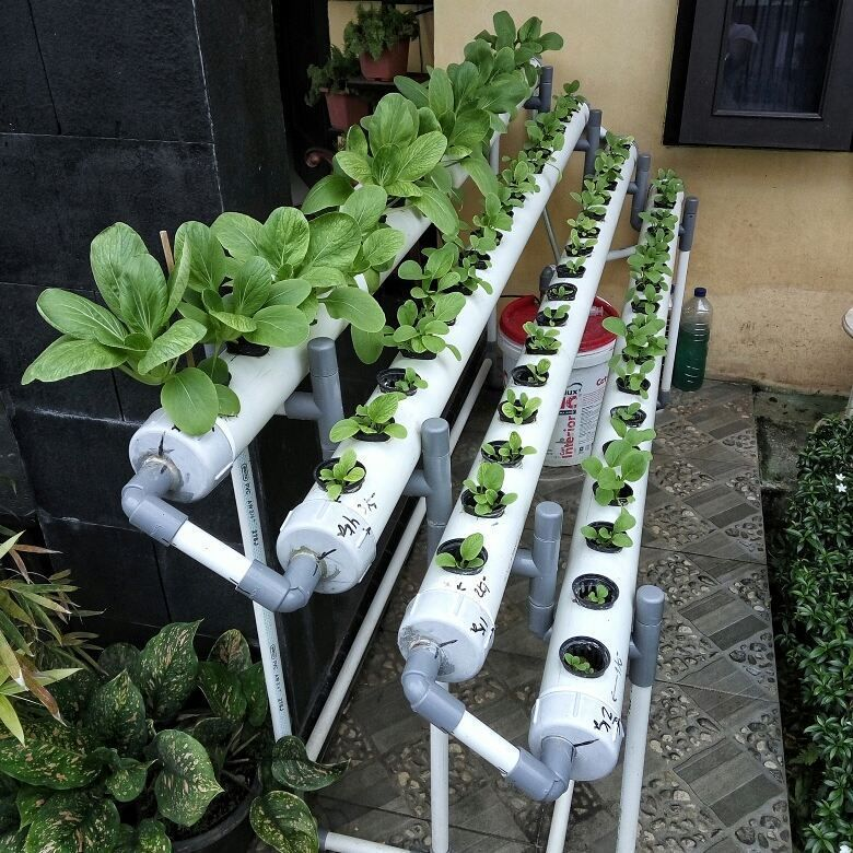 8 Best Choices Of Fast Growing Hydroponic Plants In 2020 400 x 300