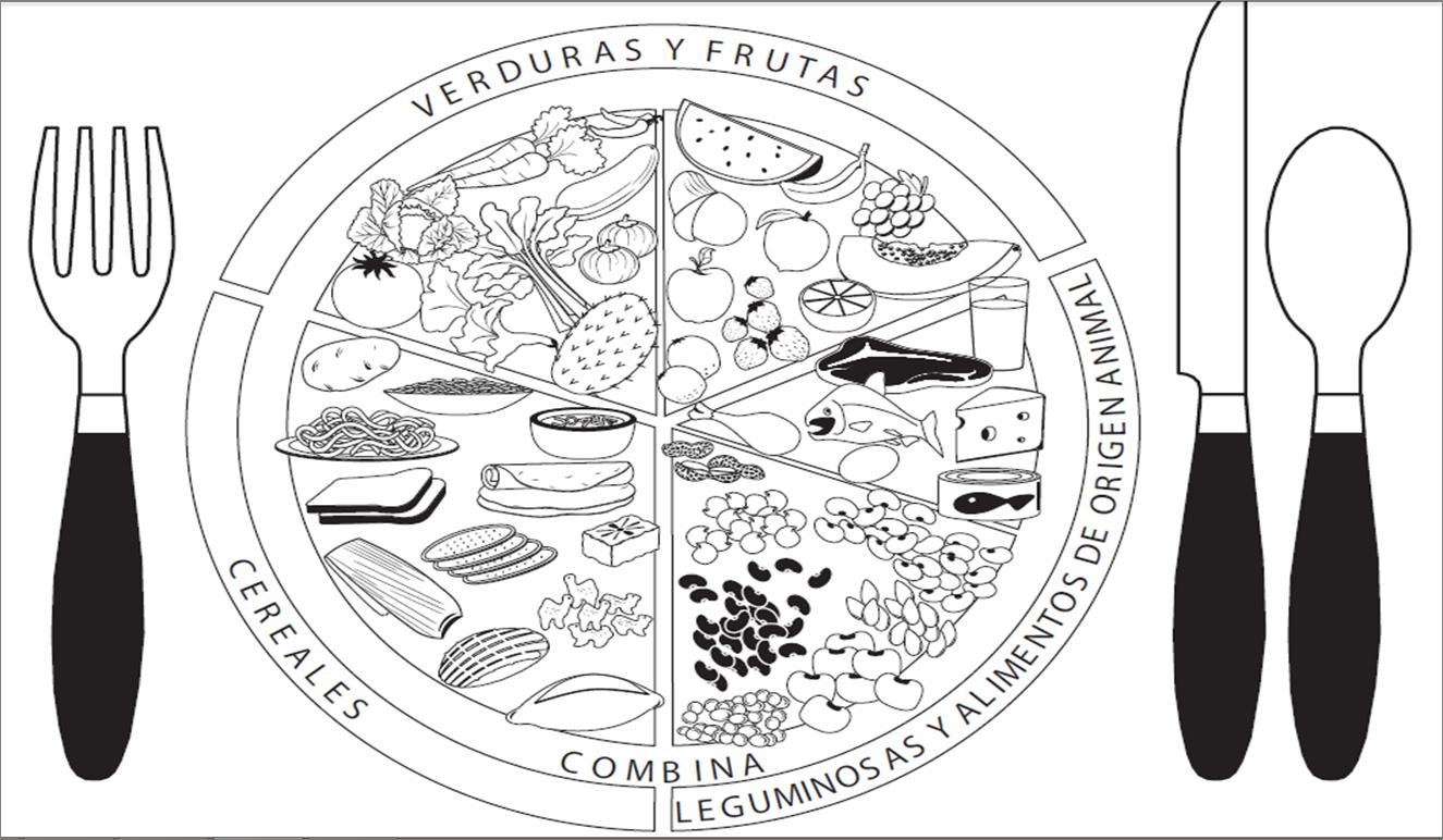 Ciencia Para La Vida Plato Del Buen Comer Sopa De Letras