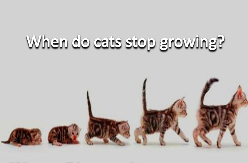 When Do Cats Stop Growing Pet Hacks Pet Safety Online Pet Boutique
