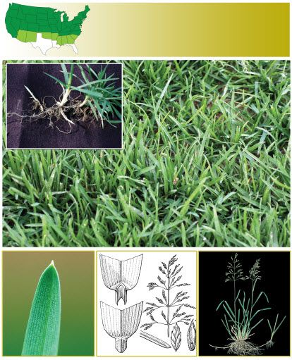 All About Kentucky Bluegrass One Of The Most Common Grass Types