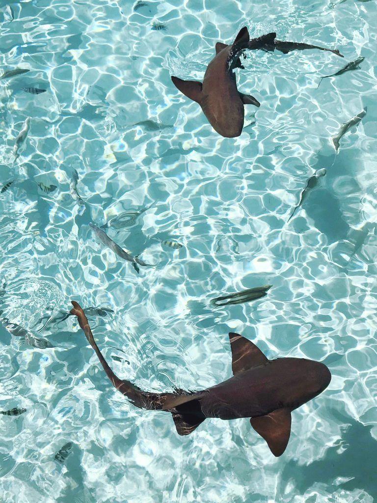 Ein Tag in der Exumas (Schwimmen mit Schweinen und Ammenhaie auf dem Bahamas) – Cravings in