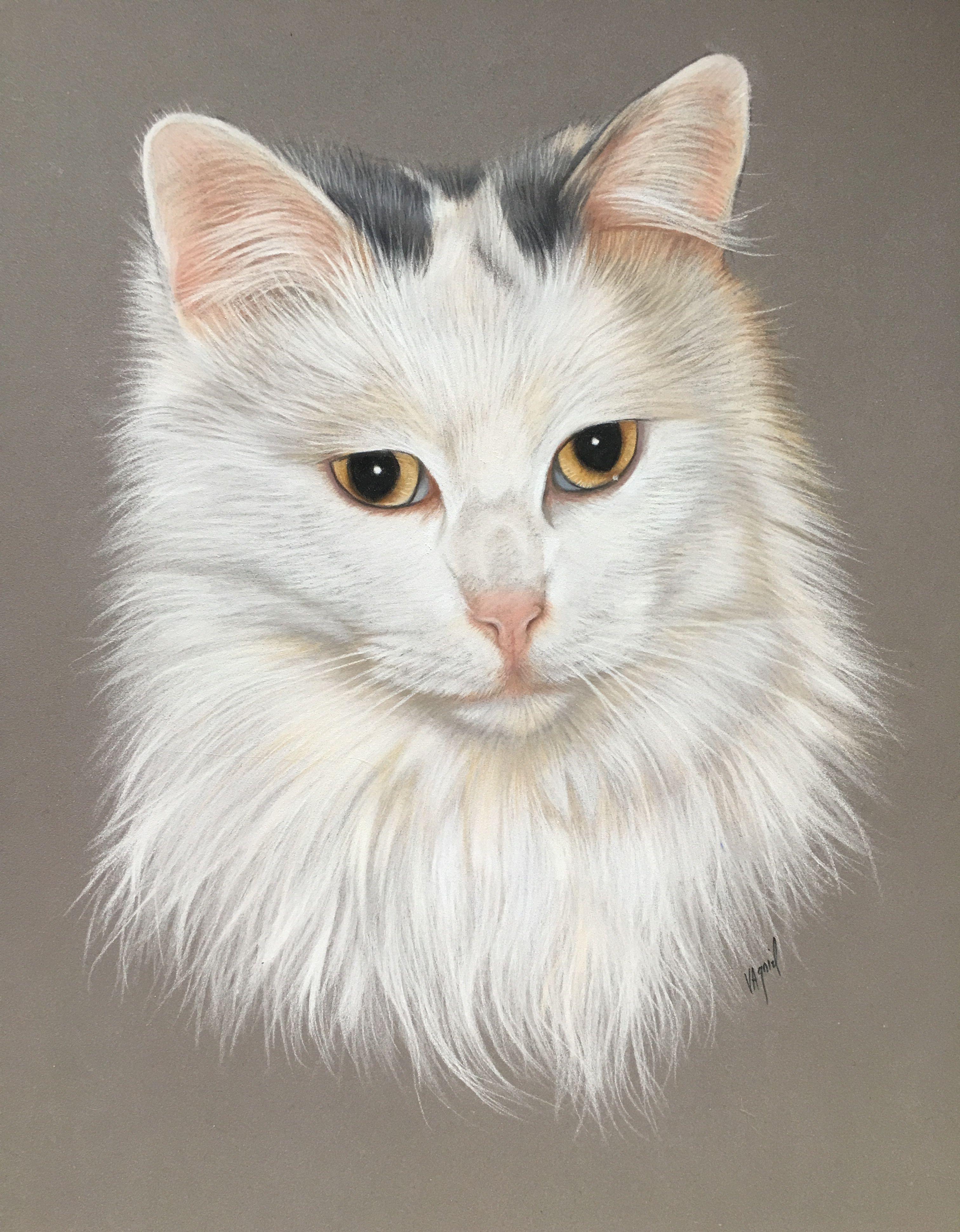 Dessin De Chat Cat Art Cat Drawing Cat Painting Animal Art