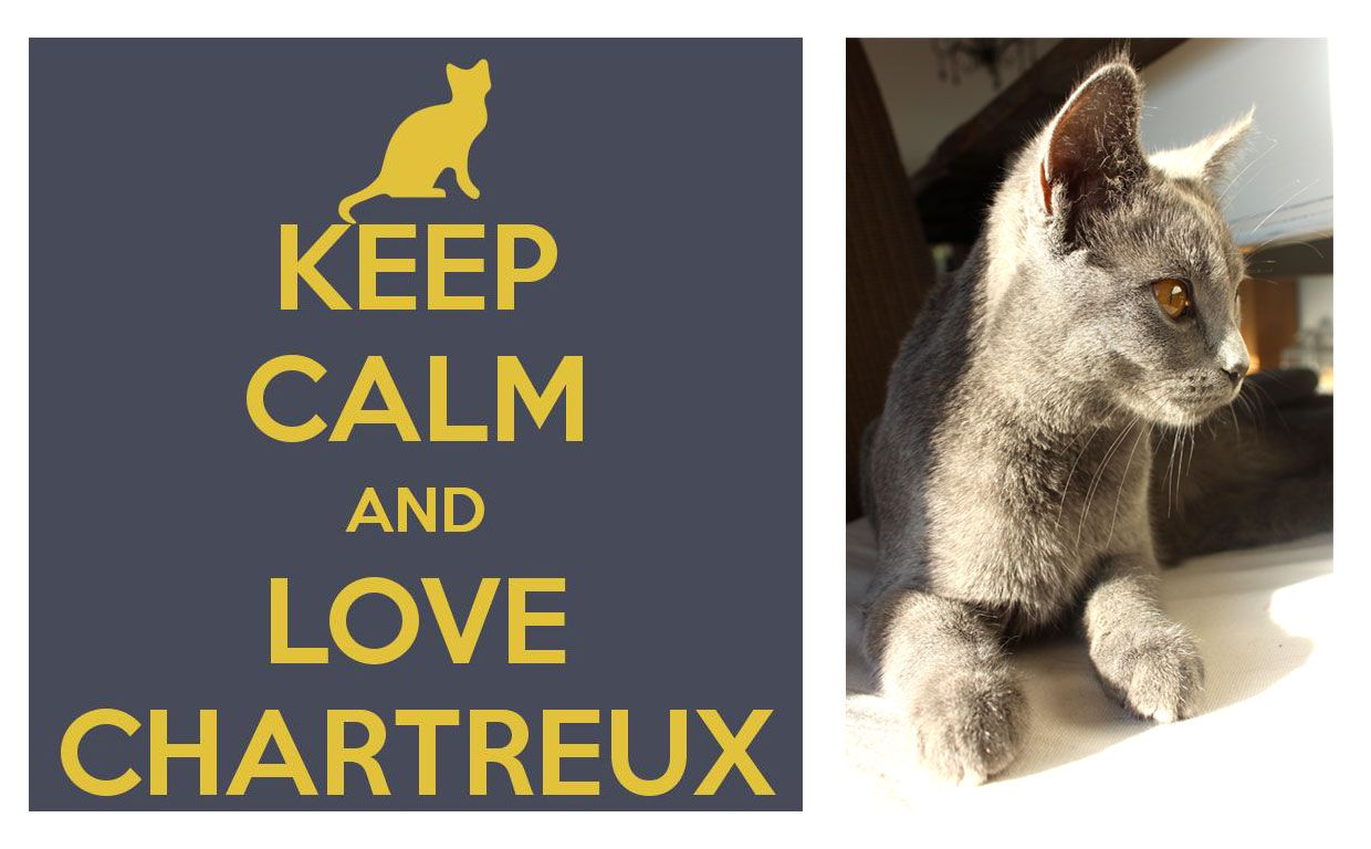 keep calm and love chartreux