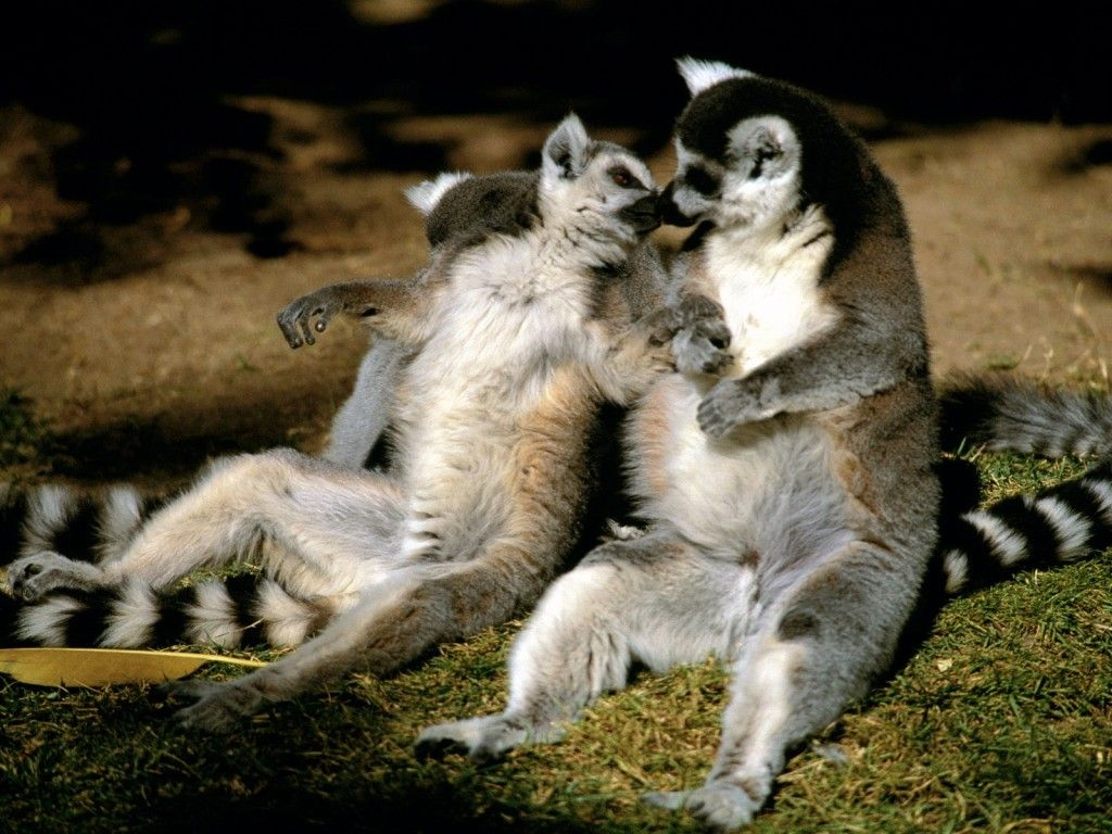 Madagascar is on our Top 2013 Holiday Destinations list.  It's a must-visit place if you're an animal lover.