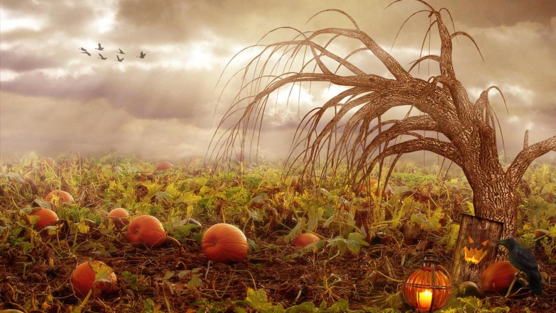 Image result for pumpkin patch pumpkin patch pinterest - Pumpkin wallpaper fall ...
