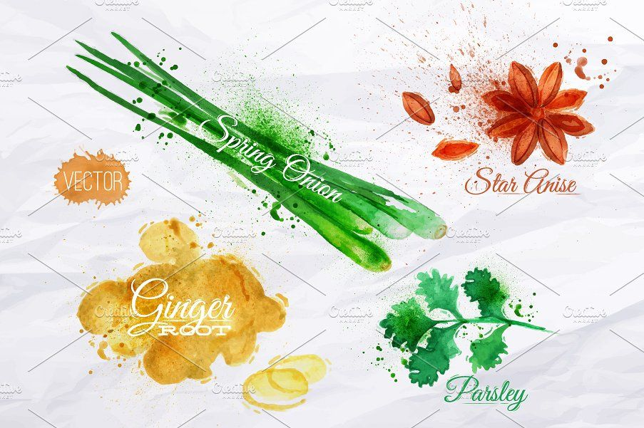 Herbs Spices Watercolor Spices Herbs Illustrations Watercolor