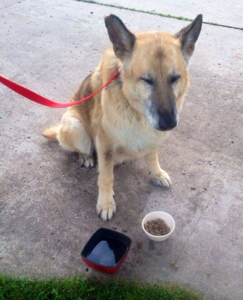Founddog 7 14 14 Tulsa Ok Germanshepherd 10 Year Old Black