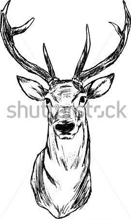 Ciervo Dibujo Artistico Buscar Con Google Animales Bellos