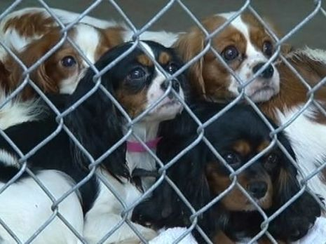 Texas Pinners Please Help Get These Babies Adopted 92 Dogs