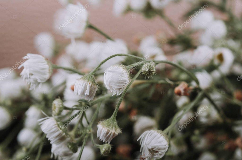Close Dried Babysbreath Flowers White Gypsophila - Stock Photo , #Affiliate, #Babysbreath, #Flowers, #Close, #Dried #AD