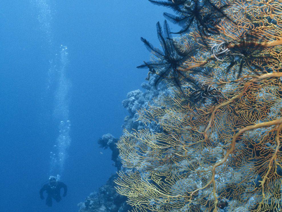 Ocean Habitats and Animal Adaptations Ocean habitat