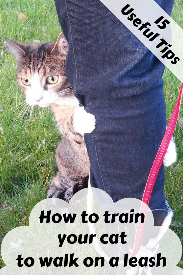 How To Train Your Cat To Walk On A Leash Cat Training Cat Leash Cats