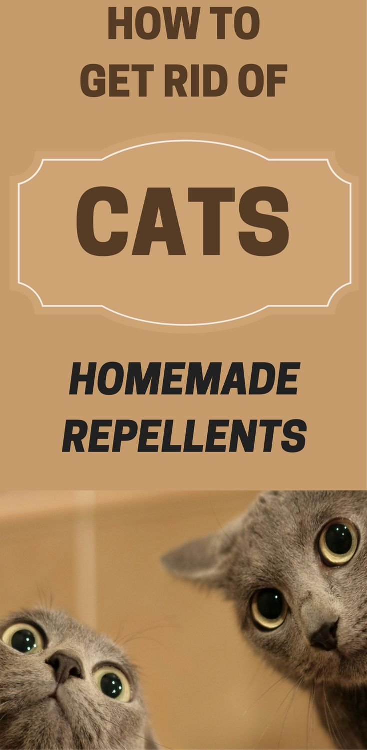 How to get rid of cats homemade repellents deep