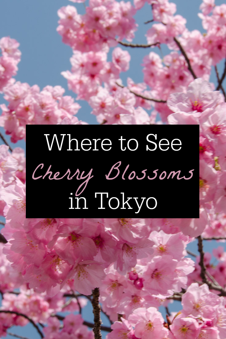 Finding Cherry Blossoms In Tokyo S Ueno Park Ever In Transit Tokyo Cherry Blossom Japan Ueno Park