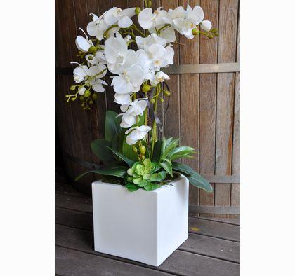 orchidee w domu