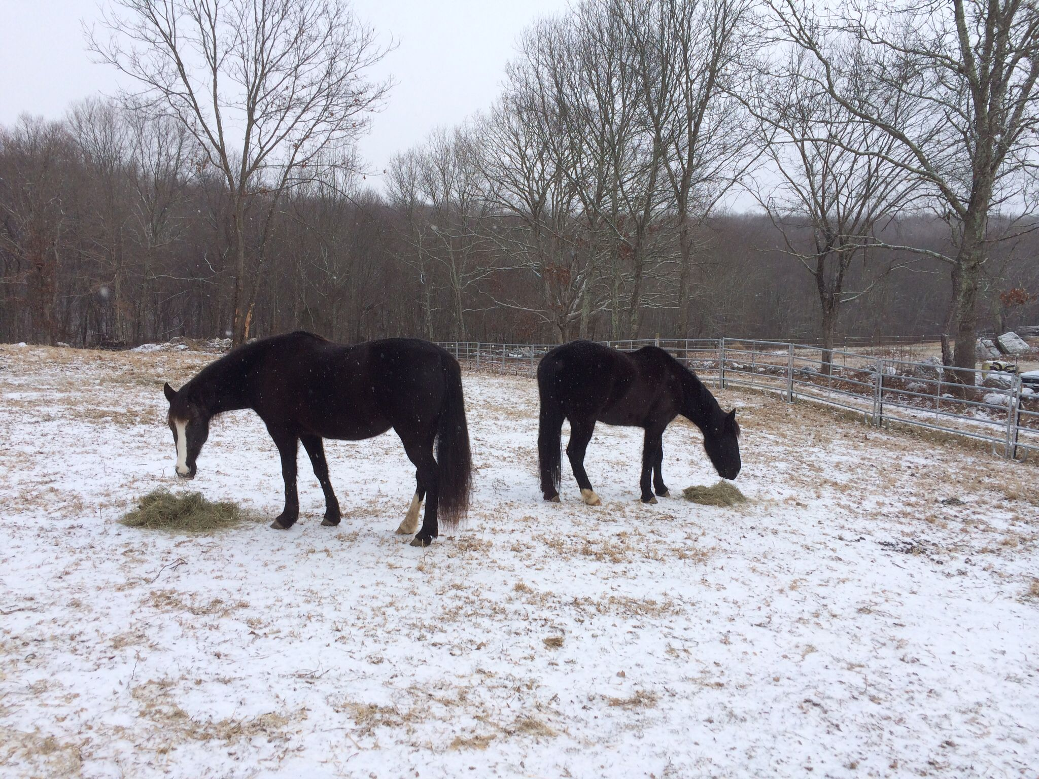 Snowy day with the horses