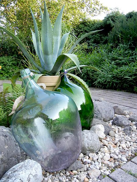 Photo of Agave (bot. Agave americana) decorata con alcune vecchie bottiglie di palloncini nel nostro …