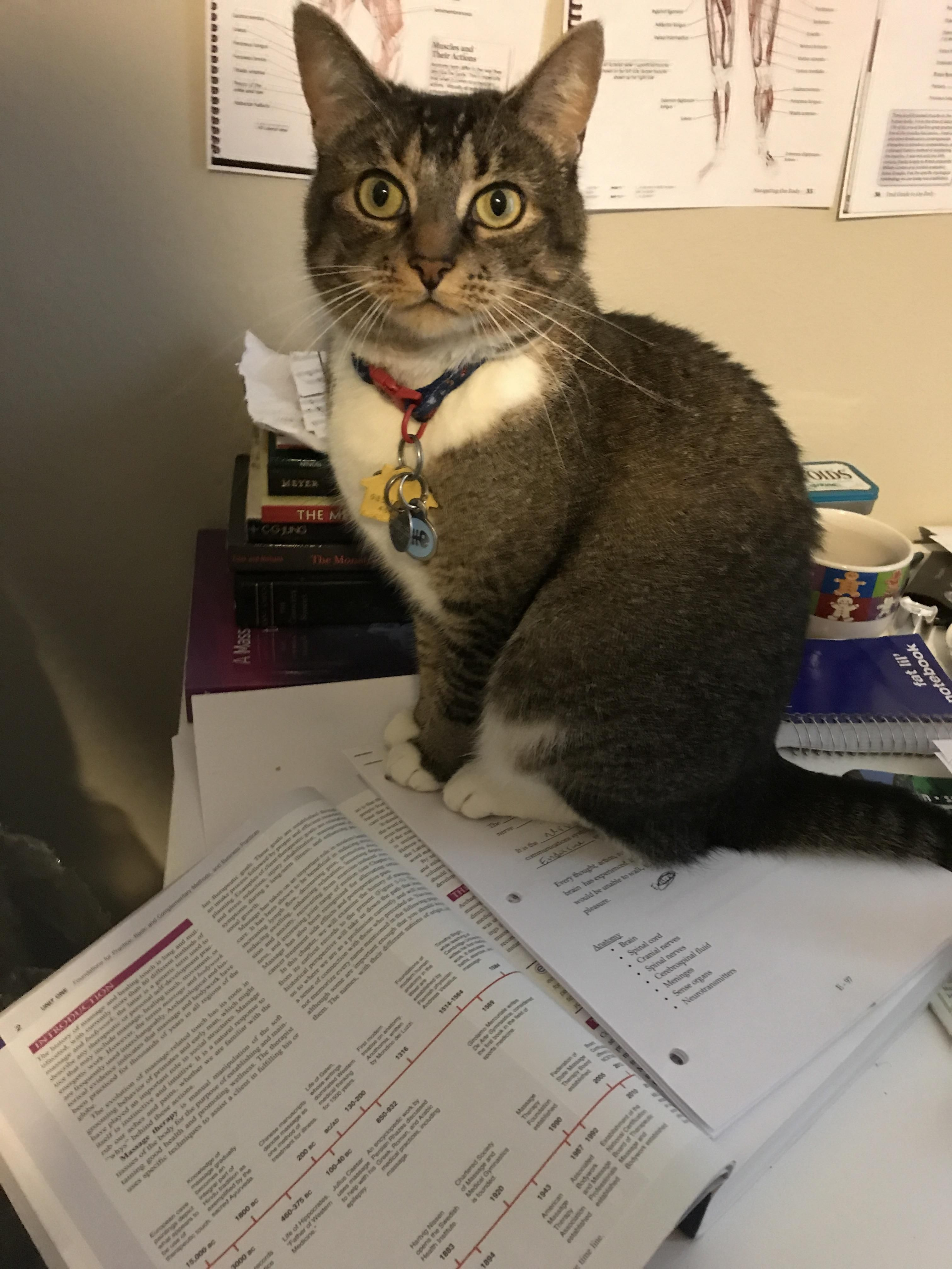 The answer to my homework's most difficult questions is: Cat. http://ift.tt/2qXxKQu