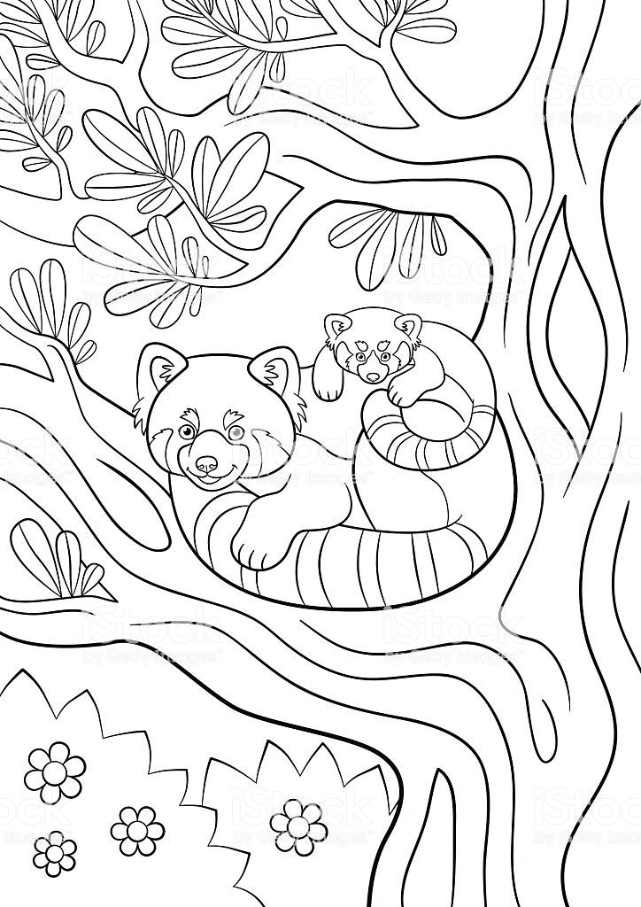 Baby Red Panda Coloring Page | Puppy coloring pages, Panda ...