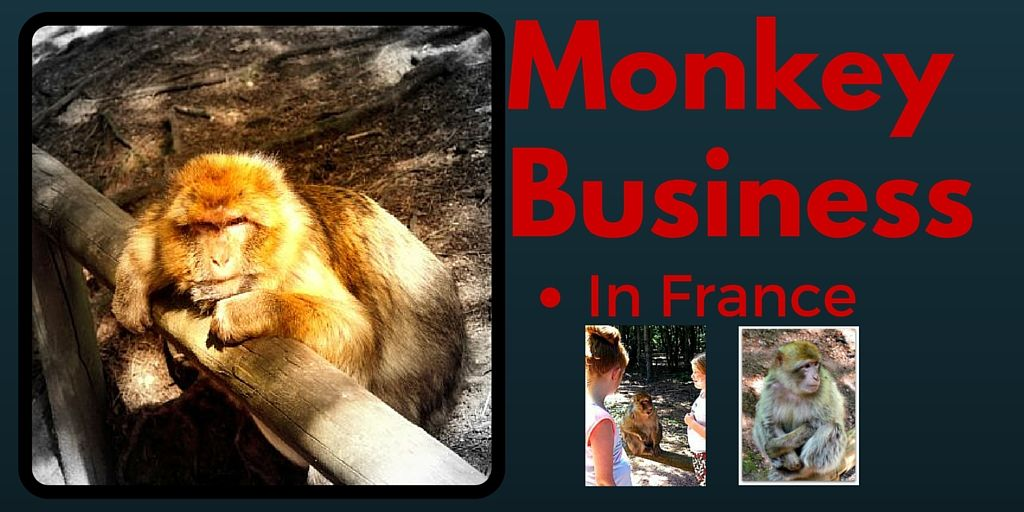 Monkey Business in France