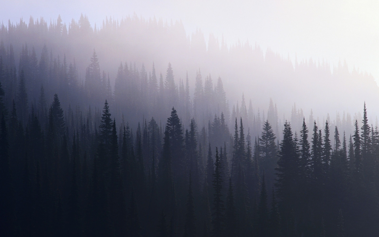 Dark Forest Wallpaper Hd