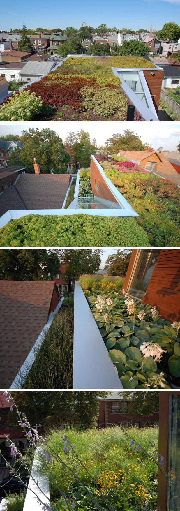 roof planting serene sun house | This modern house has a large green roof with a variety of ...