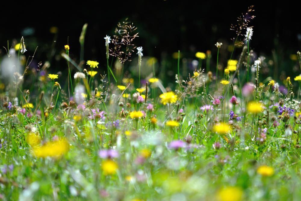 Fields flowers by Marian Lázaro