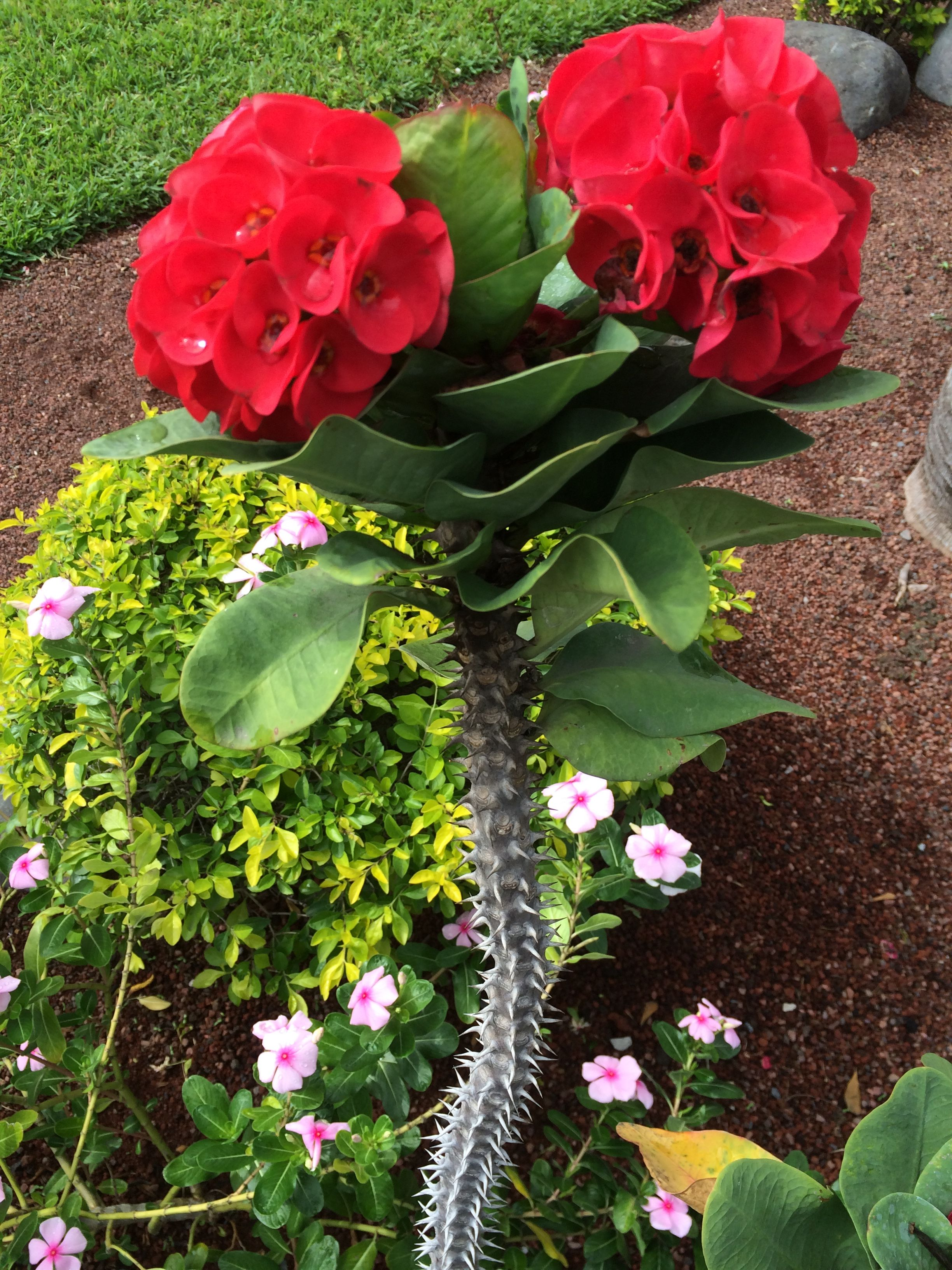 Bonito Productos Para Las Uñas De Flores Silvestres Bandera - Ideas ...