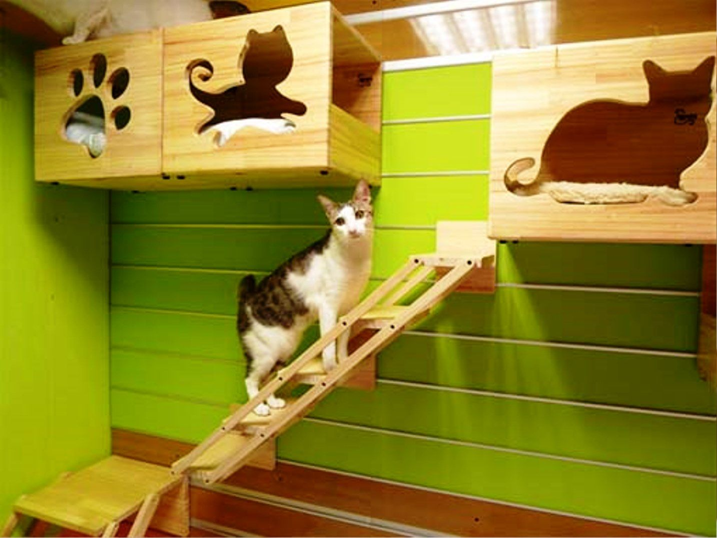Indoor Cat House | Pet House Design | Pinterest | Cat houses, Cat ...