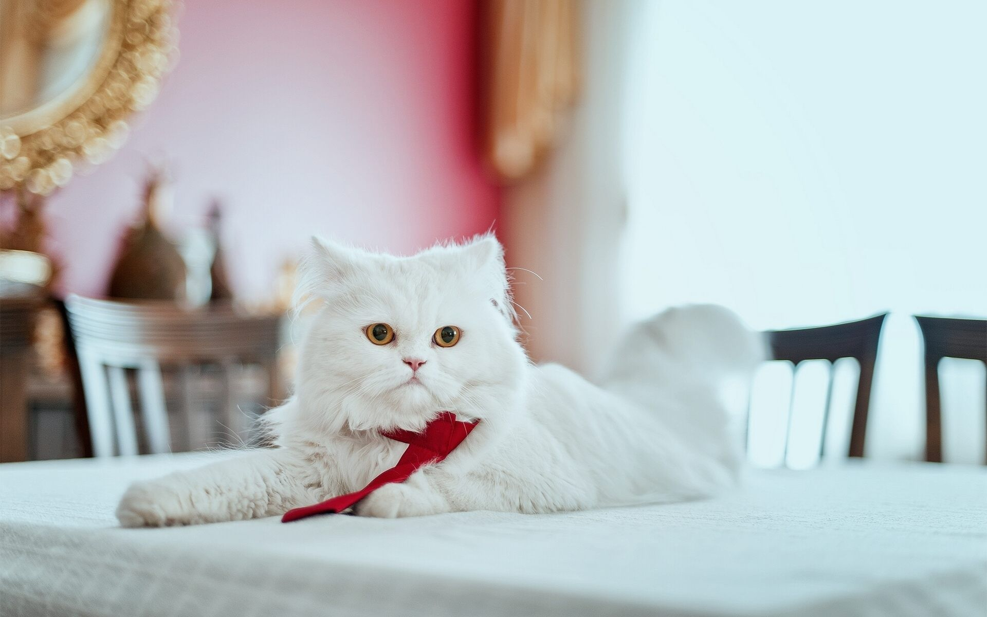 Hd wallpaper cat - Persian Cat Wallpapers Hd Download