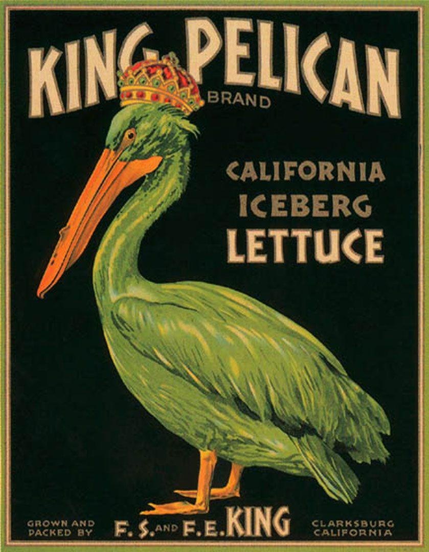 King Pelican Lettuce