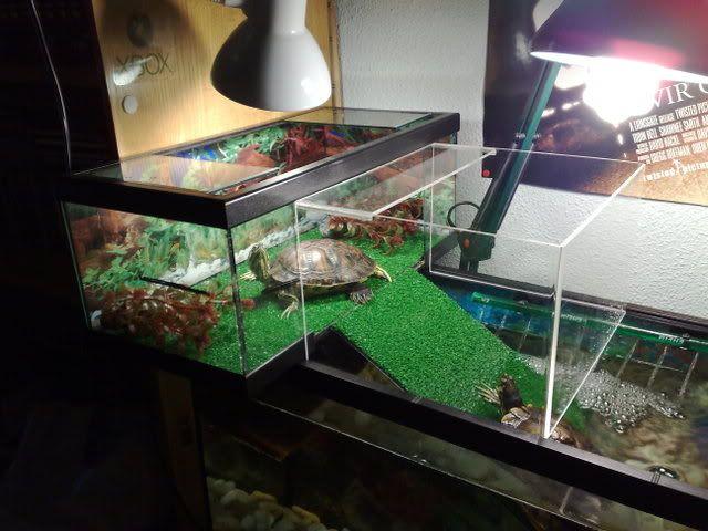 Tortuga de mascota cada cuanto le cambio el agua 2 de 2 for Peceras para tortugas