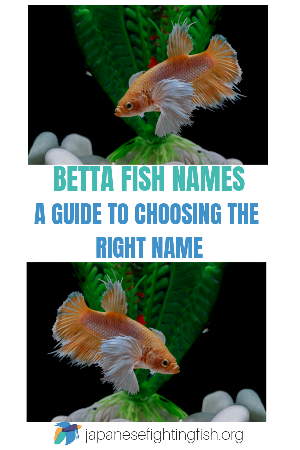 Betta Fish Names What Should I Call My Betta Fish Betta Fish Betta Fish
