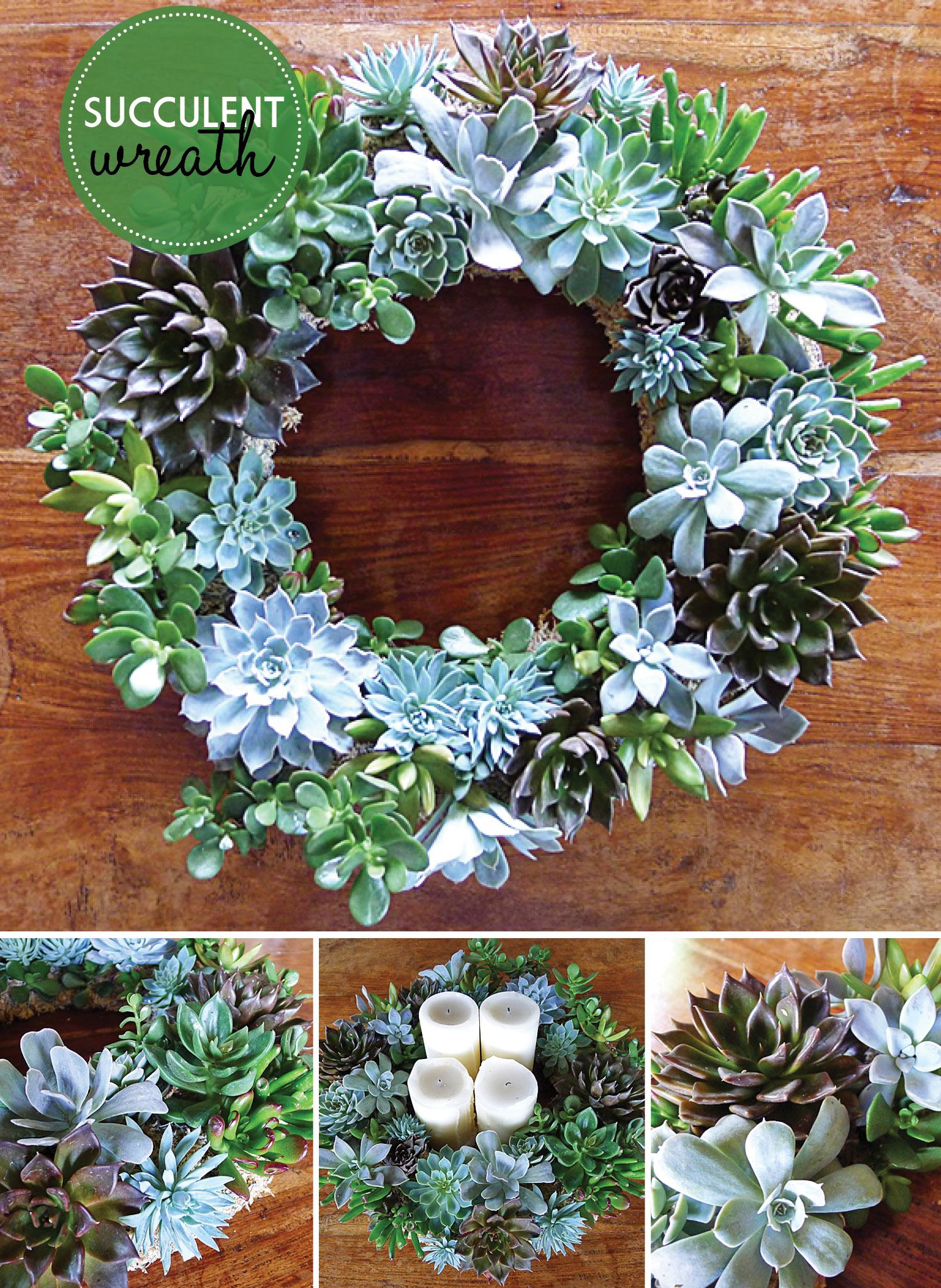 Trend Autumn Change Succulent wreath, Australian